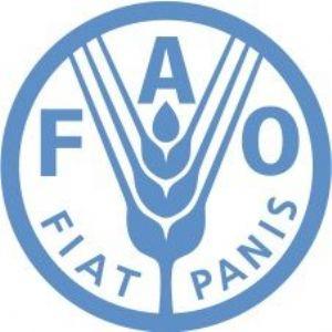 Madagascar : La FAO, le FIDA et le PAM à remportent le prix d'excellence de collaboration 2016