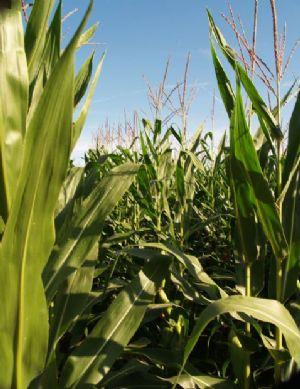 FAO: Moins de pesticides, plus de revenus