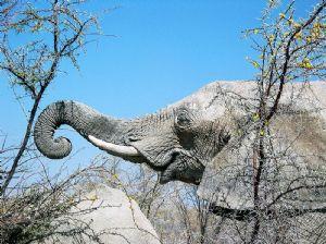 Tanzanie : Un élephant tue un touriste américain
