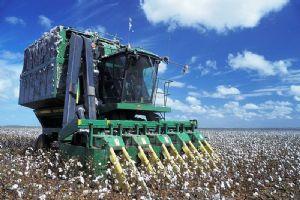 Burkina Faso: Quatre producteurs de coton tués dans la province des Balés