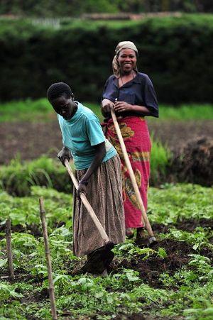 UA: Le délégué chinois appelle à renforcer la coopération Chine-Afrique dans le secteur agricole