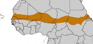 Afrique en marche