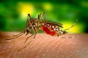 Maurice : Alerte à la dengue après la découverte de 16 cas
