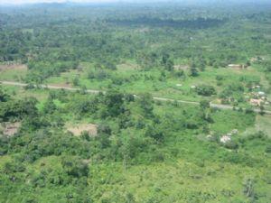 Côte d'Ivoire : les sciages clandestins du bois inquiètent les autorités forestières du pays