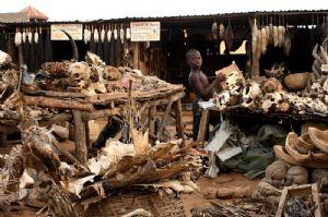 Bénin : célébration de la seizième édition de la fête du vodou
