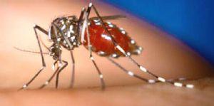 """Mozambique : Les autorités affirment que la dengue est """"sous contrôle"""""""