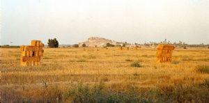 Niger : Opération de vente de céréales à prix modéré au profit des populations vulnérables