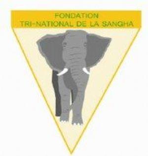 Congo : Le Tri-National de la Sangha inscrit au patrimoine mondial de l'UNESCO