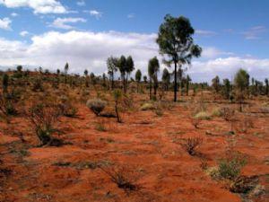 Algérie : 57 degrés 42 morts