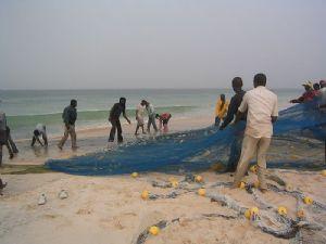 Repos biologique de la pêche industrielle observé en Mauritanie