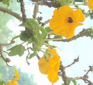 Sept plantes succulentes de Madagascar seront inscrites dans l'annexe II de la CITES