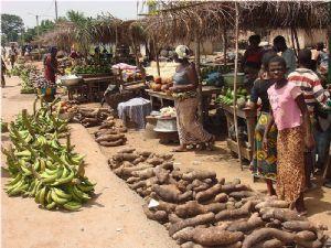 12.000 paysans ivoiriens reçoivent des semences pour relancer les cultures vivrières