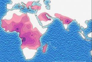 Gabon : 2% de la population est atteinte de la drépanocytose