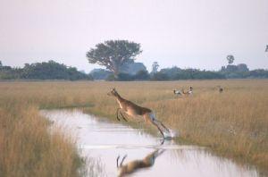Des barrages vidés par la sécheresse au Botswana