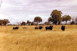 La Tanzanie escompte davantage de visiteurs