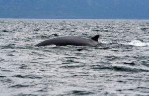 Une baleine de six mètres s'échoue sur une plage algérienne