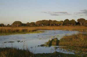 La Tanzanie dément la privatisation du parc national de Katavi