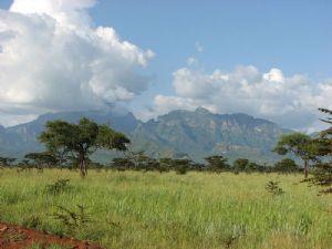 L'Ouganda lance une campagne de plantation d'arbres à travers le pays