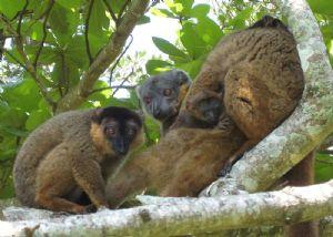 Madagascar: la loi contre le trafic de bois de rose adoptée pour une autre donne?
