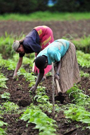 L'Afrique a besoin d'un changement de paradigme pour une meilleure gestion de son paysage