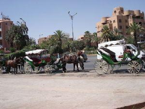 A Marrakech les calèches sont en danger