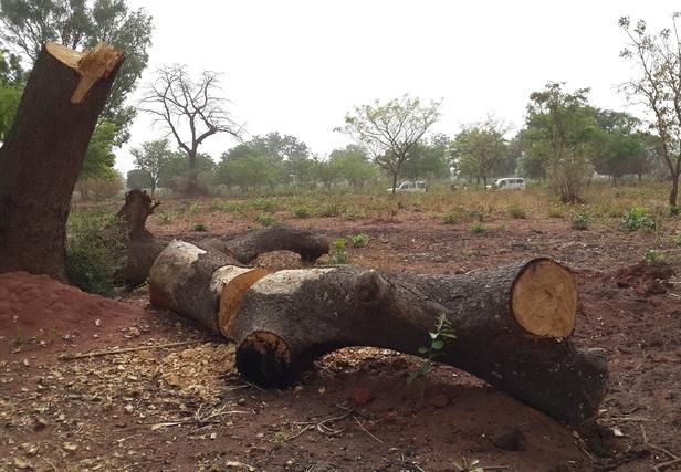 Environnement: l'Afrique perd plus de 68 milliards de dollars par an en raison de la dégradation des écosystèmes