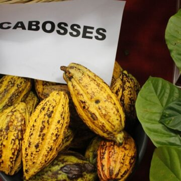 La Côte d'Ivoire ambitionne une transformation de 1 million de tonnes de cacao