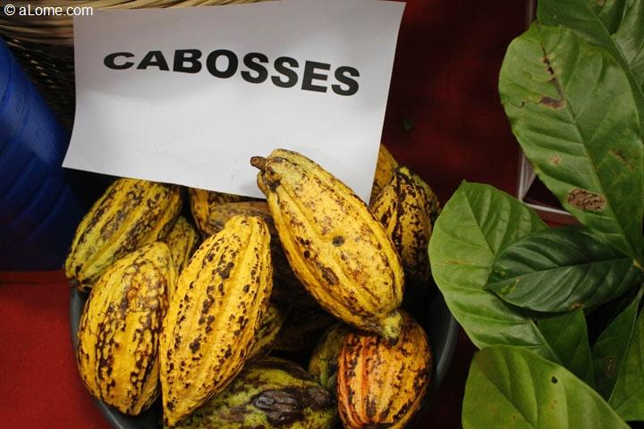 Cacao: La Côte d'Ivoire décide d'arrêter la fourniture de semences aux producteurs