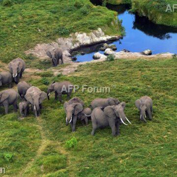 Face à l'urgence, la CITES renforce la protection des animaux sauvages