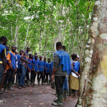 Plan d'urgence pour les «saigneurs» de caoutchouc en Côte d'Ivoire