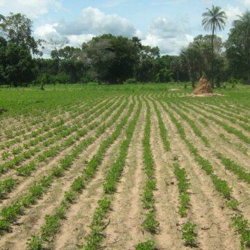 31 pays africains ont besoin d'une aide extérieure pour couvrir leurs besoins alimentaires (FAO)