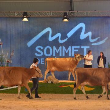 Le sommet de l'élevage de Clermont-Ferrand reçoit l'Afrique comme invitée spéciale