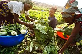 Réunion autour des réflexions sur comment nourrir une Afrique qui se réchauffe?