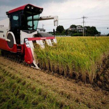 Foncier en Afrique : la corruption, un frein à l'autosuffisance alimentaire