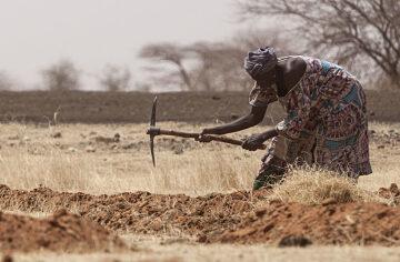La FAO se penche sur l'exploitation des terres arides à la COP 25