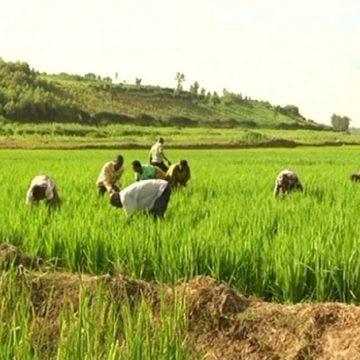 Engagements de Malabo pour l'Agriculture : 5 ans après, des résultats en dents de scie