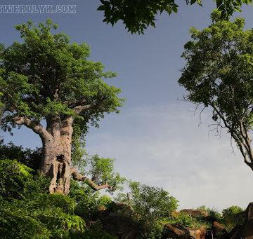 Sierra Léone : L'arbre emblématique de Freetown parti en incendie